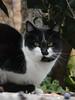 Luisita again. (bego vega) Tags: gato cat mascota pet luisita animal madrid vf bego vega bv begovega veguita