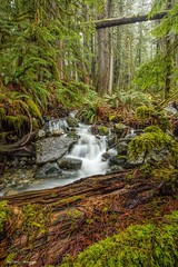 Forest Myst (photobydave@gmail.com) Tags: forest rain raining creek walk wander hike myst ewok landscape pacificnorthwest vancouverisland britishcolumbia canada