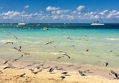 Cruise del Sol, Varadero, Cuba (wpc302) Tags: nikon d3300 dslr cuba varadero travel gull seagull ship