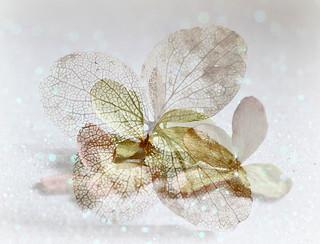 Intricate Petals