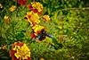 Bicho Bug (Carlos M. M.) Tags: huesca aragón pirineos hdr macro bug siresa sony sonyalpha6000 nature naturaleza garden jardín