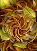 58678.01 Hemerocallis (horticultural art) Tags: horticulturalart hemerocallis petals sepals petalsandsepals swirl