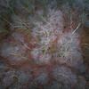Fiber (Draws_With_Light) Tags: vegetation autumn landscape sunset season woods abstract allerthorpewood djiinspire1pro woodland scene drone tree eastridingofyorkshire forest camera fields allerthorpecommon aerialphotography places djimft15mmf17asph