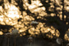 Flower in the dark - La Cerra (LlNK) Tags: flower dark coquimbo lights tree shadow boke t5i