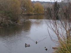UK - Surrey - Dorking - Meadowbank Park - Lake (JulesFoto) Tags: uk england surrey ramblers capitalwalkers dorking lake