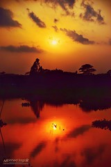 ::The Sunset and The Glamour of Nature:: (Sagor's) Tags: nikon nikon5300 nikond5300 tamron1750 tamron17 tamron tamronlens d5300 5300 naturephotography naturephoto naturalphotography nature bd bangladesh colors color lighting light lights sun sunlight sunray sunset
