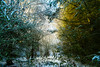 """snow covered forest turns into a fine art painting in golden afternoon light, winter in Potterton, Aberdeenshire, Scotland (grumpybaldprof) Tags: aberdeenshire scotland uk """"siorrachdobardheathain"""" canon 7d """"canon7d"""" sigma 1020 1020mm f456 """"sigma1020mmf456dchsm"""" """"wideangle"""" ultrawide """"fineart"""" ethereal striking artistic interpretation impressionist stylistic style contrast shadow bright dark black white illuminated colour colours painting snow light golden branches trees leaves fern scrub foliage"""
