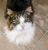 Pōpoki Noel (Bill Adams) Tags: explore a6500 baltimorecounty cat maryland middleriver poki popoki pōpokinoel