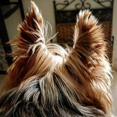 Fur, fur away