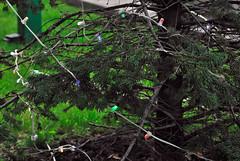 Christmas tree garland (vorotnik1) Tags: christmas tree garland decoration lights colors needles leds