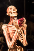 Body Worlds Pulse, California Science Center (InSapphoWeTrust) Tags: bodyworlds california californiasciencecenter expositionpark losangeles northamerica usa unitedstates unitedstatesofamerica plastinate plastination us