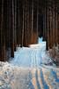 X-Country (Dan Haug) Tags: pinery ncc nationalcapitalcommission ottawa crosscountry trail pinetrees nopeople winter january 2018 xt2 xf50140mmf28rlmoiswr xf50140 2x teleconverter fujifilm trees path snow leadinglines