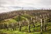 Prosecco-Land (christine thormählen) Tags: veneto collina treviso