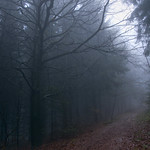 Im Nebelwald thumbnail