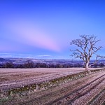 Old Tree, Muthill thumbnail