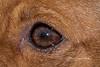 WK02 ANIMAL DETAIL (pix2fix) Tags: bressiranch california carlsbad fpar adoption dog dogs nmarcia rescue animal detail