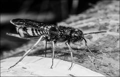 DR100503_034A (dmitryzhkov) Tags: moscow russia film analog life wildlife documentary reproduction macro macrophotography closeup bee wasp hymenoptera bwnature nature dmitryryzhkov hunter victim hunt