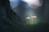 20171021_094931.jpg (jussidimitrijeff) Tags: fungus vantaa pitkäkoski