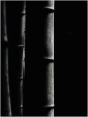Bamboo Woods (Armin Fuchs) Tags: arminfuchs japan nippon bamboo bambus tree light gotsu
