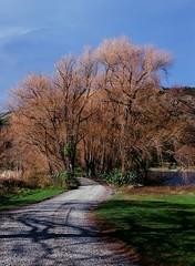 Lake Tutira (andrew.kiel) Tags: film:brand=fuji film:iso=100 film:name=velvia100professional geo:lat=3923351839 geo:lon=17689376056 geotagged pentax645 analog analogue newzealand neuseeland nzl mittelformat mediumformat 6x45 fujivelvia100professional aotearoa ncps northcoastphotographicservices laketutira herbst baum tree autumn hawkesbay