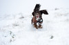 Spaniel (Alex Hannam) Tags: snow weather leicester england uk gbr bradgatepark dog