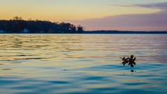 a meeting and a parting (dajonas) Tags: lake sunset michigan puremichigan autumn november
