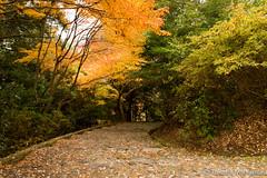 Arashiyama Park (takashi_matsumura) Tags: kyōtoshi kyōtofu japan arashiyama ngc nikon d5300 park 嵐山公園 亀山地区 autumn sigma 1750mm f28 ex dc os hsm
