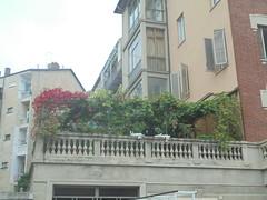 581 (en-ri) Tags: terrazzo pergolato sony sonysti foglie verde leaves condominii vite