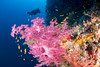 Soft coral (edouardfourcade) Tags: colors soft coral redsea rose underwater