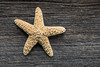 Trendy Stylish Starfish and Seashell on Vintage Barn Board With (blurMEDIA Stock) Tags: stock authentic barnboard beach beachdecor beachfront blurmedia blurmediastock copyspace creativecommons decor decoration decorations ebay ecommerce etsy fresh homedecor modern nautical ocean online product productphotography retail retro royaltyfree rustic sea seashell shell shopify simple starfish stockphotography store stylish summer trendy vintage web website windowlight