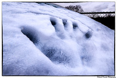 171210_035 (Patrick Decorte) Tags: hennuyeres brainelecomte hainaut belgique belgium boisdelahoussière bois arbre hiver neige feuille froid paysage nature main empreinte froig