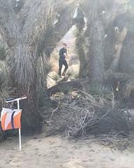 039 Searching For The Joshua Tree Grove Control (saschmitz_earthlink_net) Tags: 2017 california orienteering redrockcanyon statepark laoc losangelesorienteeringclub mojavedesert desert kerncounty elpasorange