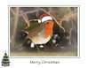 Merry Christmas (~ **Barbara ** ~) Tags: christmas robin hat card tree snow garden greetings wild framed photoshop canon7dii