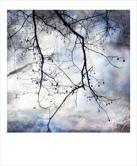 Sycamore (jeanne.marie.) Tags: blackandwhiteandblue i💕treesilhouettes winter textured iphoneography iphone7plus silhouettes tree sycamore