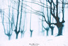 Frozen (Mimadeo) Tags: winter snow snowy landscape trees mystery forest tree cold season highkey white black blackandwhite ethereal fantasy mood moody atmosphere atmospheric mysterious fog foggy mist misty light bright monochrome spooky gloomy scary
