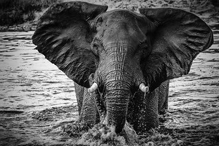 Chobe National Park (XXVI)