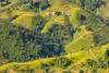 _29A0450.0917.San Sả Hồ.Sapa.Lào Cai (hoanglongphoto) Tags: asia asian vietnam northvietnam northwestvietnam landscape scenery vietnamlandscape vietnamscenery vietnamscene terraces terracedfields terracedfieldsinvietnam defile sunlight sunny morning sunnymorning treehill homes house canon tâybắc làocai sapa phongcảnh buổisáng nắng nắngsớm sườnnúi hẻmnúi ruộngbậcthang ruộngbậcthangsapa đồicây nhà nhữngngôinhà canonef70200mmf28lisiiusmlens canoneos5dsr harvest mùagặt lúachín sapamùagặt sapamùalúachín sansảhồ flanksmountain