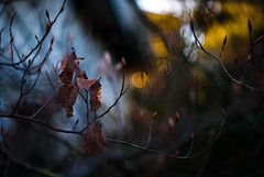 hours before Solstice II (culuthilwen) Tags: sonyalpha230 helios44m6 helios44m helios m42 f2 58mm sonysti autumn winter bokeh leaves dof foliage nature blurry lights vintagelens gold orange vscofilm00