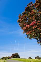 Currently (Russ Dixon Photography) Tags: russdixon russdixonphotography thelightbulbprojectcurrently lightbulbproject newzealand newplymouth taranaki
