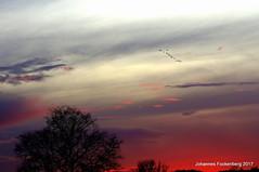 Die Wildgänse kommen (grafenhans) Tags: sony alpha alpha55 a55 slt55 slt tamron 2870200 himmel herbst sonnenuntergang gänse vogel vogelschwarm farben color grafenwald bottrop nrw