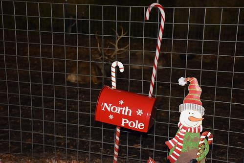 North Pole Reindeers