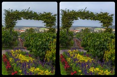 Flowers in the park 3-D / Stereoscopy / CrossEye / HDR / Raw (Stereotron) Tags: sachsenanhalt saxonyanhalt ostfalen harz mountains ostfalia hardt hart hercynia harzgau blankenburg flowers blumen park garden europe germany crosseye crosseyed crossview xview cross eye pair freeview sidebyside sbs kreuzblick 3d 3dphoto 3dstereo 3rddimension spatial stereo stereo3d stereophoto stereophotography stereoscopic stereoscopy stereotron threedimensional stereoview stereophotomaker stereophotograph 3dpicture 3dglasses 3dimage twin canon eos 550d yongnuo radio transmitter remote control synchron kitlens 1855mm tonemapping hdr hdri raw