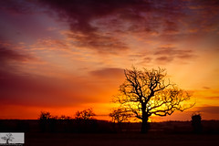 Sunrise Silhouette (Rob Felton) Tags: cardington bedford bedfordshire felton robertfelton sky skyscape cloud light sun silhouette tree trees sunrise outdoor field landscape serene