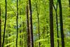 Frühlingswald 03 (zimmermann8821) Tags: baum buchenwald forst frühjahr natur sonne wald wanderungausflug