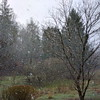 first snow (Mykl i am) Tags: snowing snow lateautumn december gray grey bare trees chilly cold flurries bottomland hearthhill
