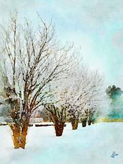 2013 - Grand parc d'Enghien - Janvier (bDom [+ 3.8 Mio views - + 47K images/photos]) Tags: bdom enghien parc arbres neige hiver art aquarelle dessin sketch