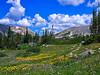 Wildflowers, Snowy Range (walter_g) Tags: sonya6000 minoltamc24mmf28 rawtherapee53 gimp296 nikcolorefexpro