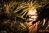Nach den Feiertagen ist vor den Feiertagen (Tom.T.Bone) Tags: canon eos 700d apsc 18135 18135mm stm iso100 135mm feiertag feiertage baum tannenbaum licht grün green schwarz black weihnachten warm xmas tree christmas holiday feast holidays