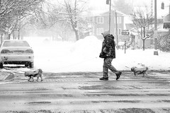 Walking the Dogs (DJ Wolfman) Tags: streetshots streetphotography streetphoto blackandwhite bw olympus olympusomd em1markii 12100mmf4zuiko zuiko zd micro43
