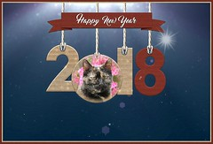 Bonne Année 2018 ! (Lau (Fripy) Not very here) Tags: 2018 voeux wishes chat new year fabuleuseenfêtesf